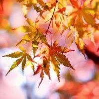 Album: Barvy podzimu