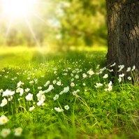 Video: Jarní radovánky