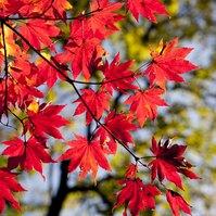 Album: Podzimní hrátky