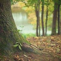 Album: Hrátky v lese (cs)