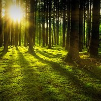 Video: Hrátky v lese (sk)