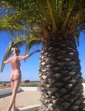 Palmová