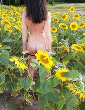 Chůze mezi řádky,, slunečnice