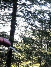 Pri ceste v lese