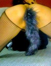 FOX hledá CAT