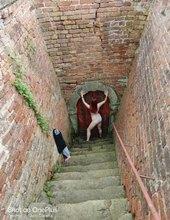 Svůdné schodiště