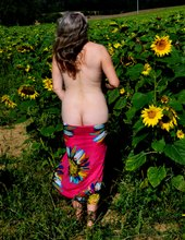 Když kvetou slunečnice