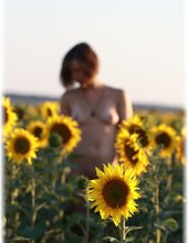 ... slunečnicová víla