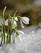 Jarní sraz
