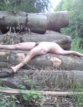 čudna šuma / divny les