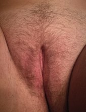 Zimny bobr