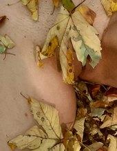 Po dlouhé době  podzimní