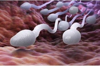 I muži s mírnými symptomy COVID-19 můžou mít nižší objem spermií v ejakulátu