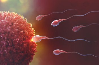 Toxické látky v našem životním prostředí snižují objem varlat, spermatu i velikost penisu