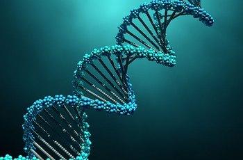V kolika letech začínáme žít sexuálně, ovlivňuje také DNA, potvrdili genetikové