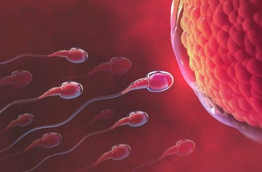 Čínští vědci vyhlásili soutěž o nejlepší sperma mezi studenty. Kvůli výzkumu kvality ejakulátu