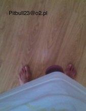 pitbull18cm