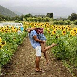 sunflowers69