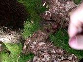Výstřik v lese