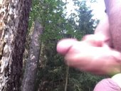 uvolnění v lese