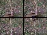 Čůrání v lese