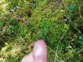 Striekanie v lese